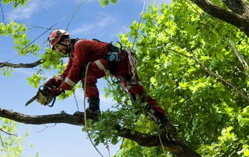 find trusted rated Kilkeel tree surgeons in Newry And Mourne